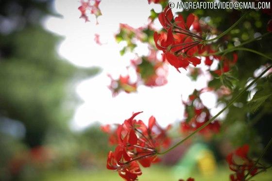 estate-fiori-andrea-battagin-foto-video-terzotempotv-07